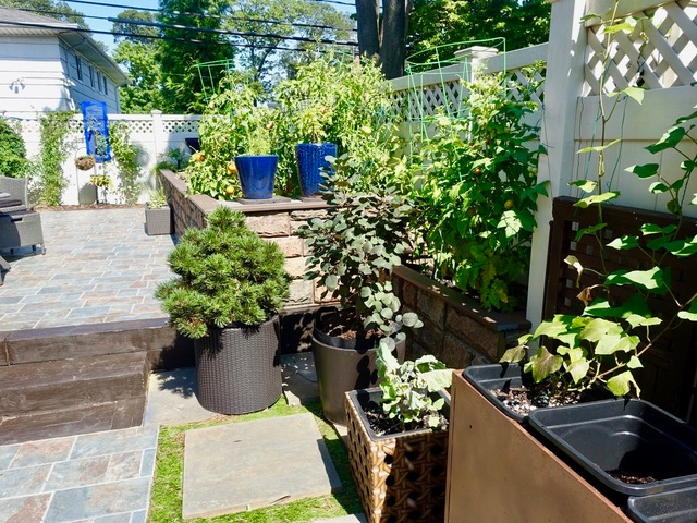 Long Island home garden with raised flower beds.